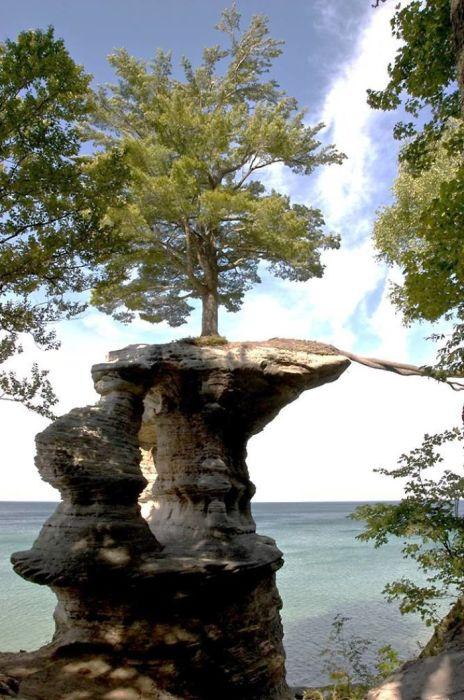 В поисках пропитания одинокое дерево на Часовой скале в Мичигане вырастило корни в сторону берега по песчаной арке, которая со временем разрушилась.