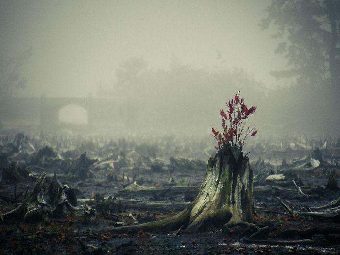 Молодые побеги дерева, которое возродилось после сильного пожара.
