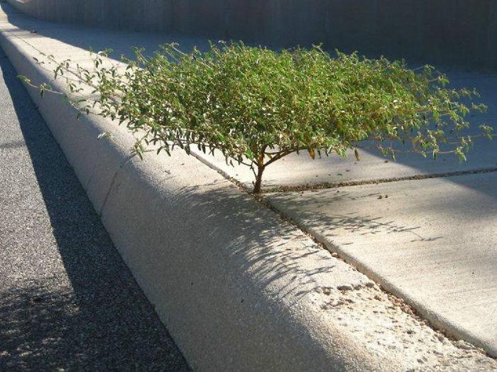 Маленькое деревце, выросшее между бетонных плит.