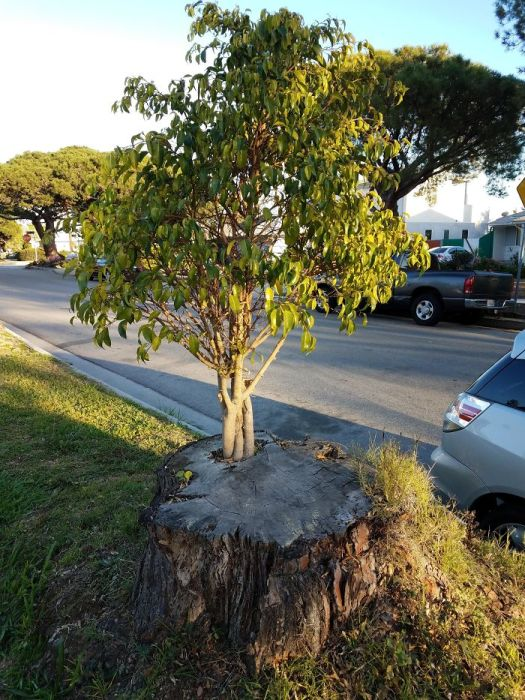 Молодое дерево, выросшее под надежной защитой.
