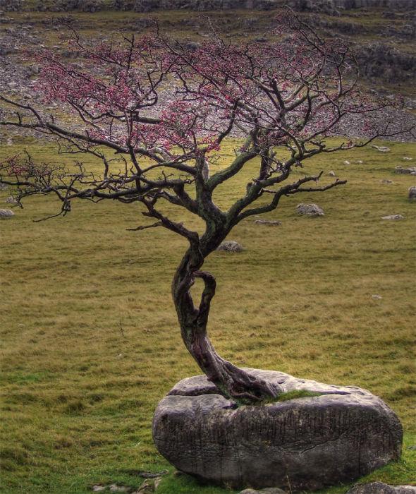 Природа – это сила, с которой нужно считаться.