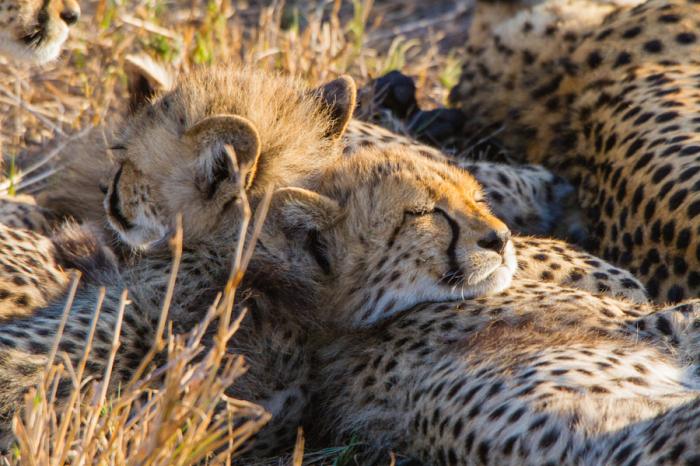 Момент сладкого сна. Автор фотографии: Davy Guthmuller.