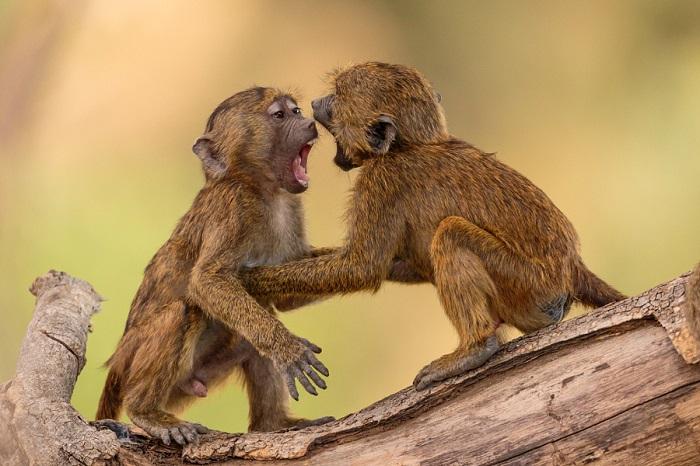 Животные дикой природы.