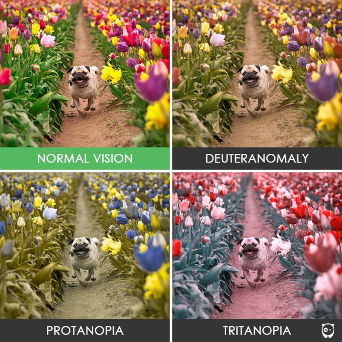 Тюльпаны, но такие разные!