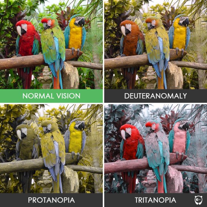 С этими попугаями не разберёшься.