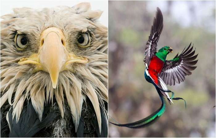 Фотографии финалистов конкурса Wildlife Photographer of the Year 2017.