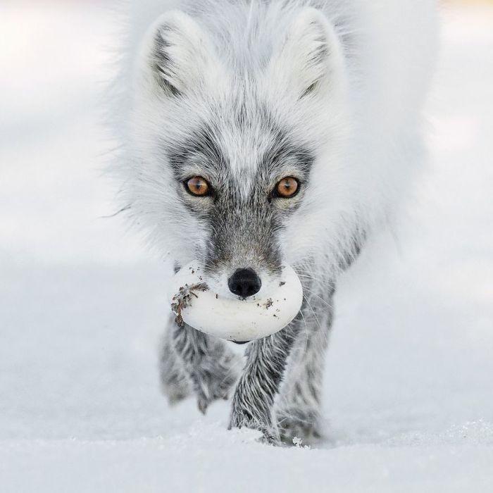 Категория «Портреты животных», автор фотографии - Сергей Горшков, Россия.