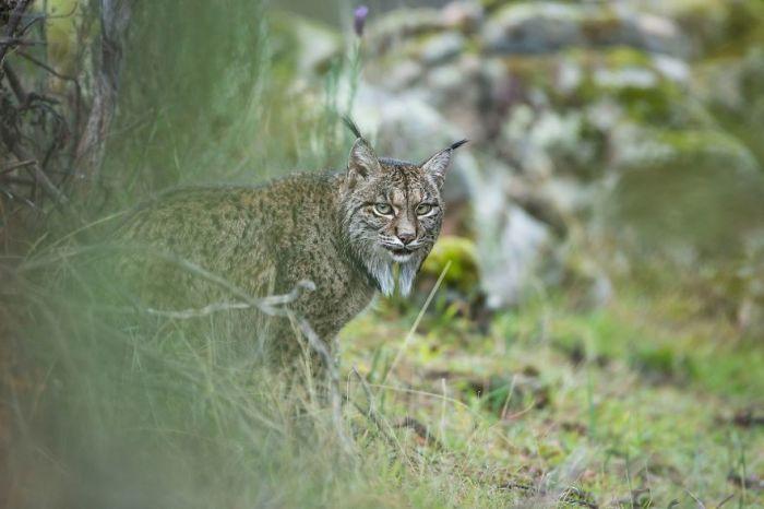 Категория «Юный фотограф дикой природы, 11-14 лет», автор фотографии - Лаура Альбиак Вилас (Laura Albiac Vilas), Испания.
