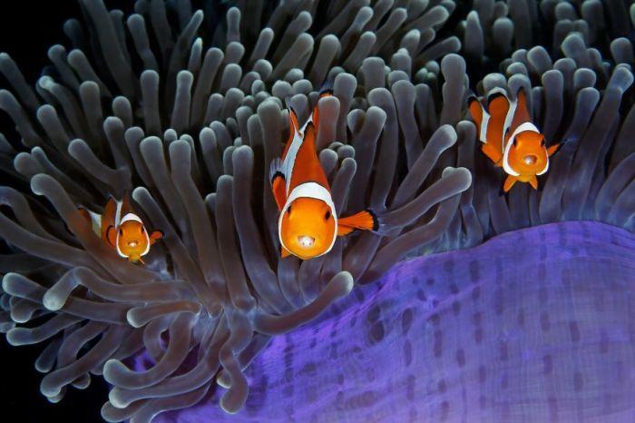 Номинация «Под водой», автор фотографии - Цин Линь (Qing Lin), Китай.