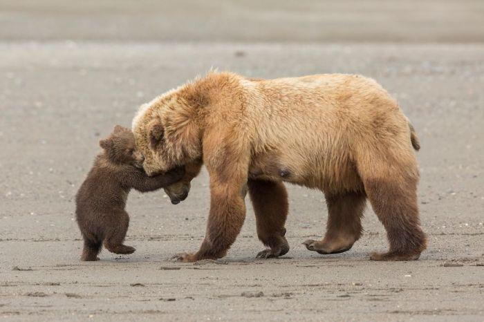 Категория «Юный фотограф дикой природы, возраст 11-14 лет», автор снимка - Эшли Скалли (Ashleigh Scully), США.