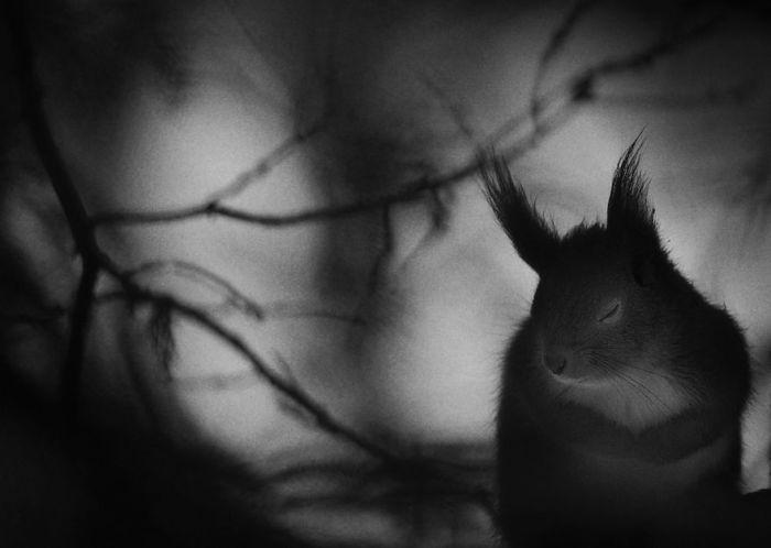 Номинация «Черное и белое», автор фотографии - Матс Андерссон (Mats Andersson), Швеция.