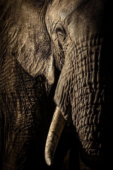 Категория «Портреты животных», автор фотографии - Дэвид Ллойд (David Lloyd), Новая Зеландия/Великобритания.