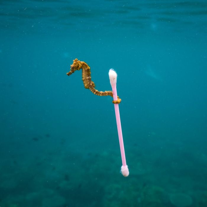 Категория «Фотожурналист дикой природы, одиночный снимок», автор фотографии - Джастин Хофман (Justin Hofman), США.