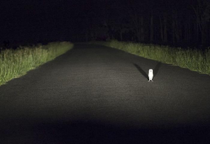 Фотография «Остановлены сборщиком дорожной пошлины», автор - Катарина Денисова (Katarina Denesova).
