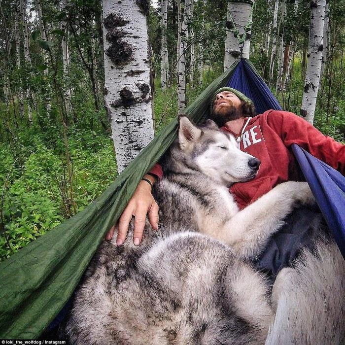 Пёс по кличке Локи, в жилах которого течёт кровь сибирского хаски, аляскинского маламута и арктического волка, и его хозяин, путешественник Келли Лунд из Колорадо.