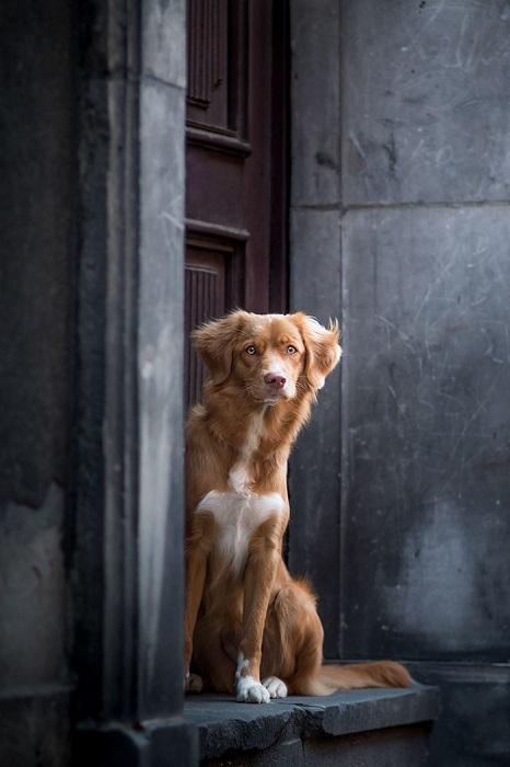 Автор фото Катажина Симиняк.