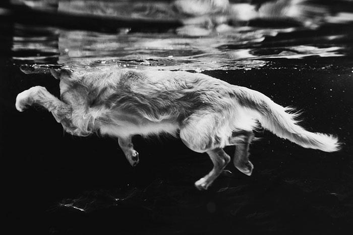 Фото Лесли Плессер.