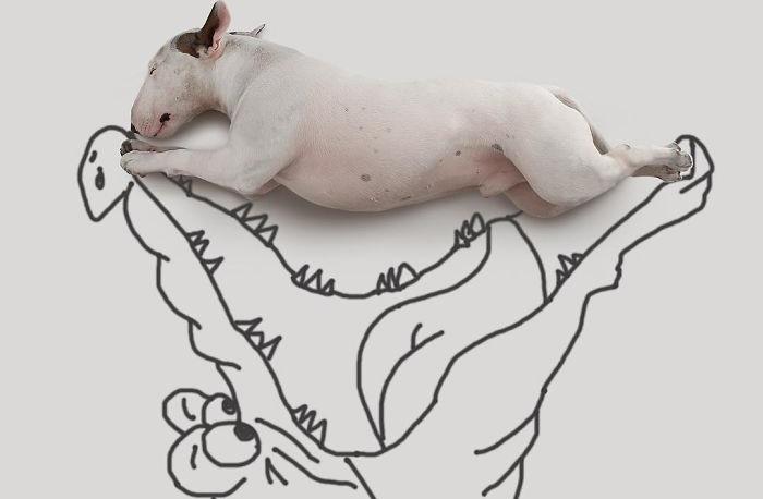 Бразильский иллюстратор Рафаэль Мантессо (Rafael Mantesso) представляет своего пса Джимми Чу в различных забавных ситуациях.