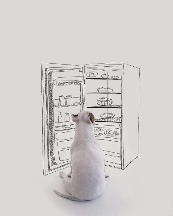 Для создания коллажа иллюстратор Рафаэль Мантессо использует свое воображение, стены и любимого пса.