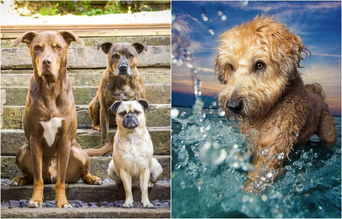 Лучшие фотографии победителей конкурса Dog Photographer Оf The Year 2017.