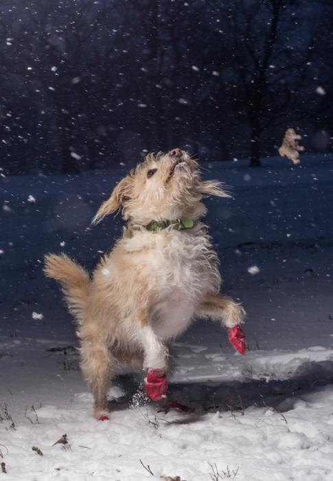 Победитель конкурса в категории «Я люблю собак, потому что…» - Джулиан Готфрид (Julian Gottfried), США.