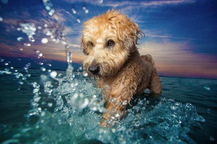 Победитель конкурса в номинации «Игривые собаки» - Кайли Грир (Kaylee Greer), США.