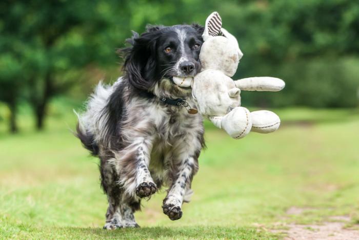 3-е место в категории «Игривые собаки» - Уилл Холдкрофт (Will Holdcroft), Великобритания.