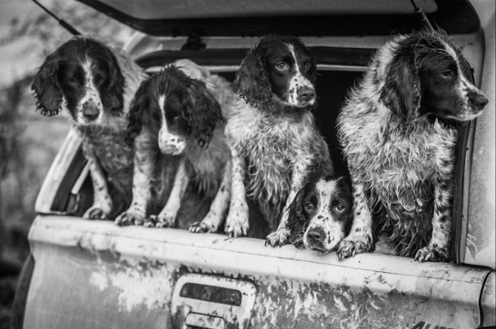 2-е место в номинации «Собаки на работе» - Люси Шарман (Lucy Charman), Великобритания.