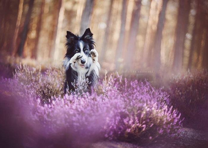 На снимках молодого чешского фотографа собаки выглядят естественными, очаровательными и забавными.