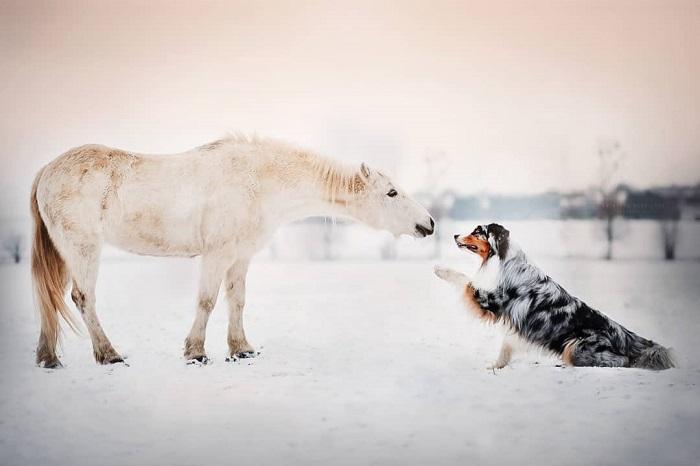 Кристина Квапилова старается запечатлеть как можно больше восхитительных фотографий со своим любимчиком Чарли.