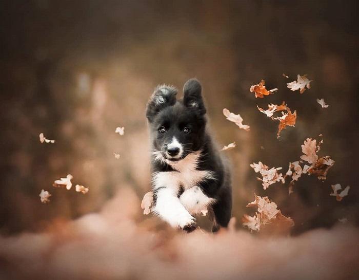 Удивительные и прекрасные портреты собак работы Кристины Квапиловой отражают неразрывную глубокую связь между человеком и животным.