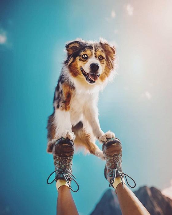Австралийская овчарка, которую фотограф считает прирожденной профессиональной моделью – главный герой потрясающих снимков Кристины Квапиловой