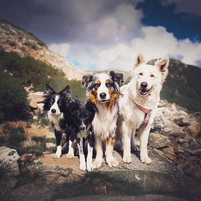 Молодой фотограф из Чехии очень любит собак, поэтому специализируется на съемках именно этих домашних животных всех пород и возрастов.