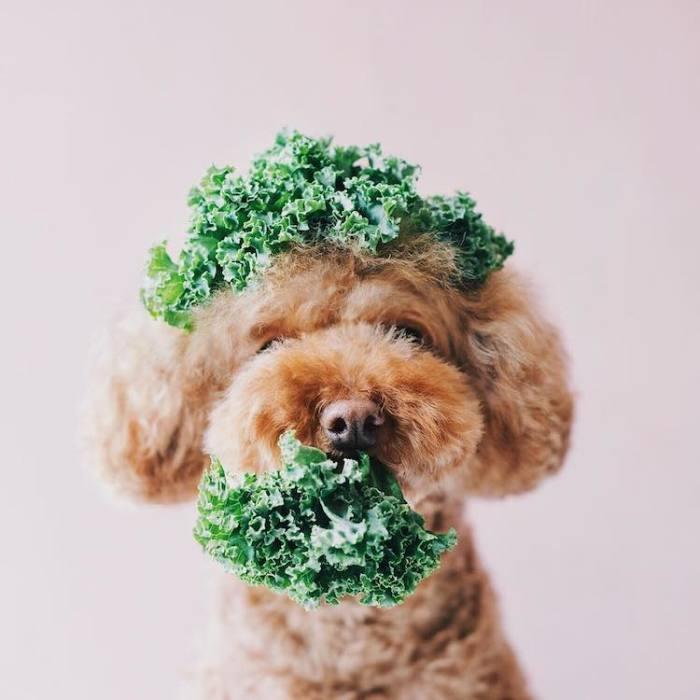 Давай сделаем зеленое смузи.