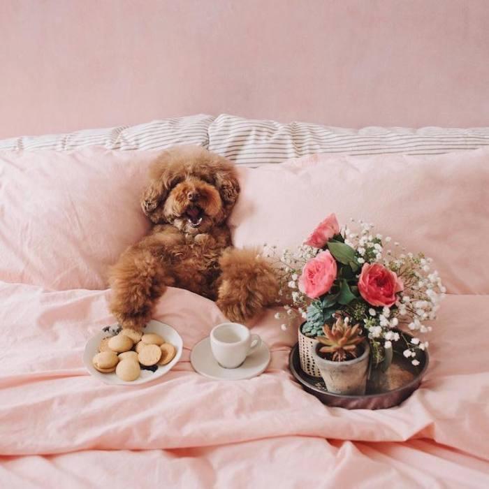 Для того чтобы проснуться и поднять себе настроение, необходима чашечка кофе с печеньками.
