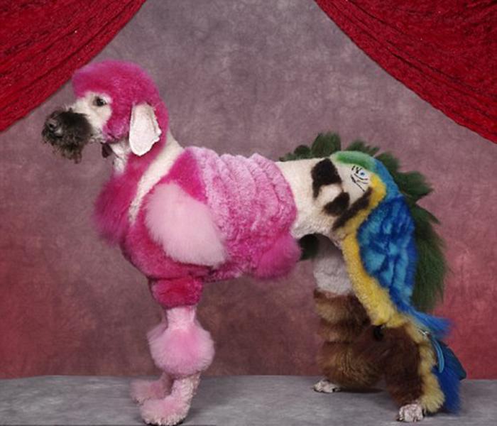 Собака с конструкциями фламинго и попугаев на выставке в Секокусе, Нью-Джерси.