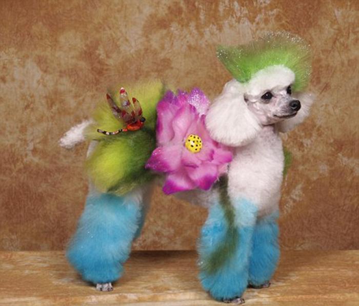 Собака с цветочным дизайном в творческом конкурсе в Херши, штат Пенсильвания.