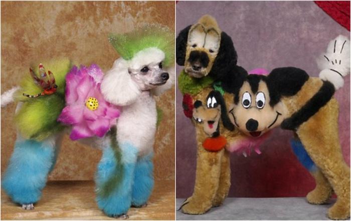Превращения псов в образцы парикмахерского искусства.