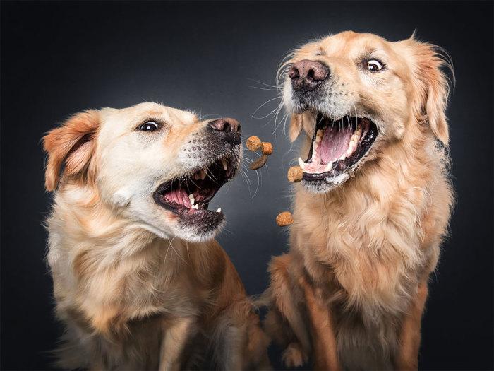 Собаки и вкусняшки на фото Кристиана Вилера.