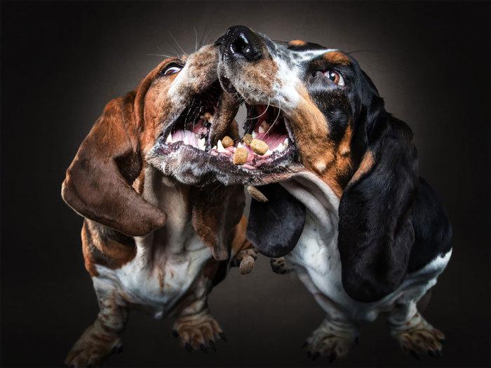 Профессиональной съемкой собак Кристиан Вилер занимается на протяжении 4-х лет.