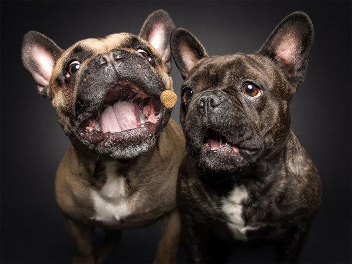 Немецкий фотограф любит работать именно с собаками, считая их лучшими моделями.