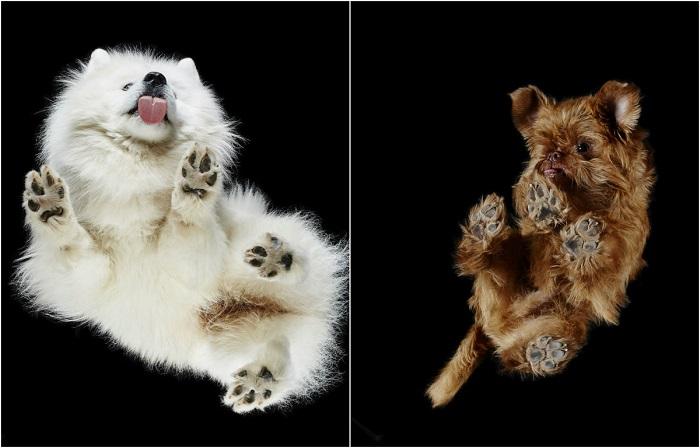 Андриус Бурба (Andrius Burba) снимает собак снизу, которые стоят на стеклянном столе.