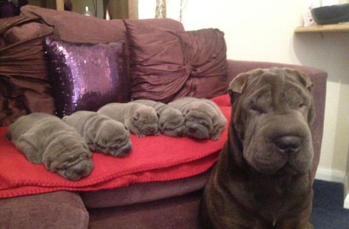 Удивительные щенки со своими любящими мамами.