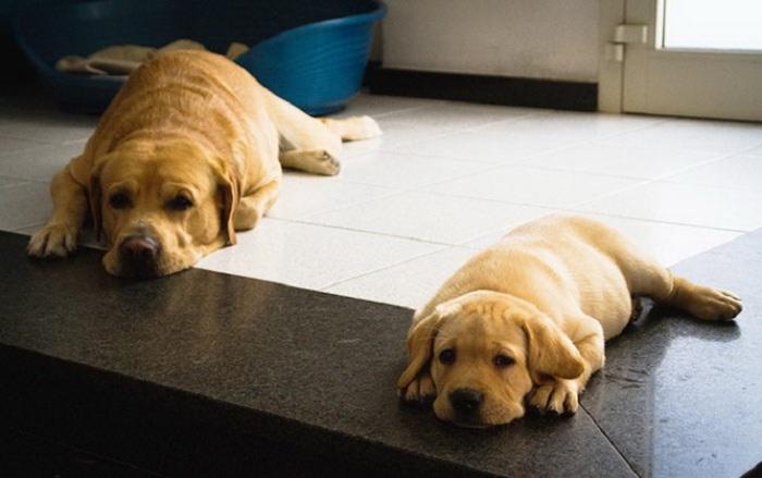 В жаркий день так хорошо полежать на прохладном полу.