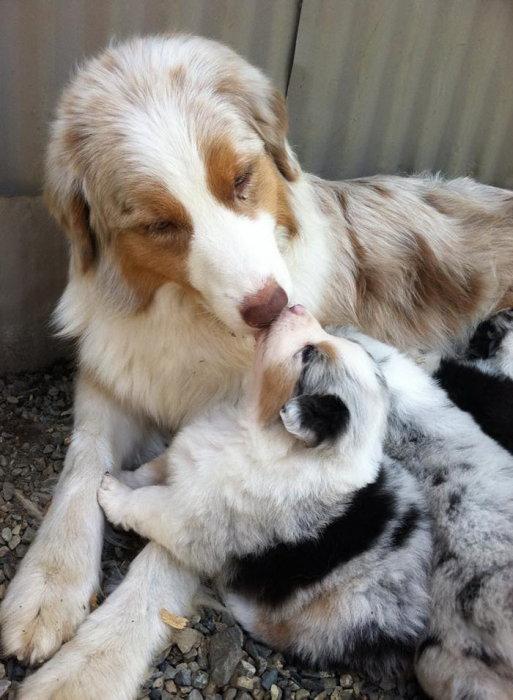 Мамочка, ну давай поцелуемся.