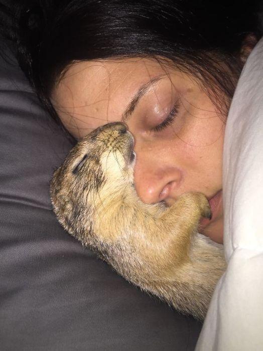 Домашние питомцы отлично знают - где и с кем им спать…
