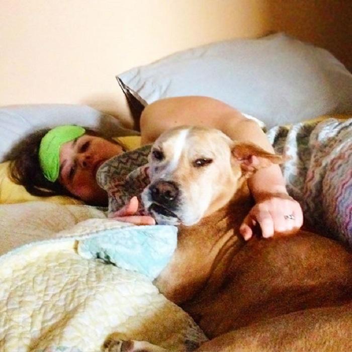 «Вот таким взглядом каждое утро награждает меня наша собака».