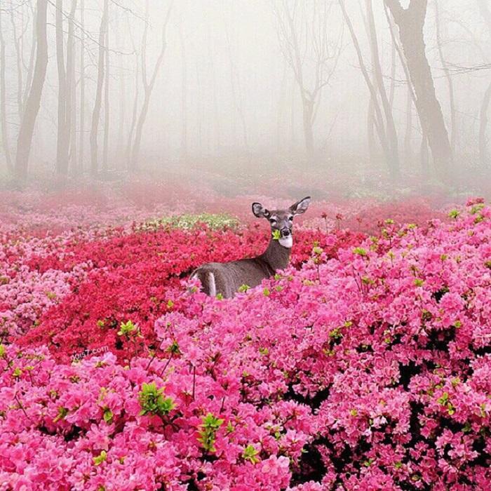 Сказочное изображение дикого оленя мастером сюрреалистичных композиций.