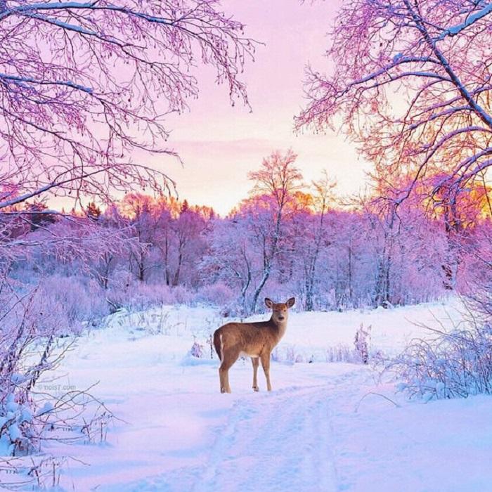 Снимок дикого оленя, помещенного в сказочную обстановку.