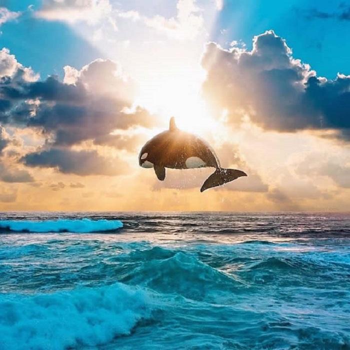 «Волшебный» кит, застывший в воздухе над морскими волнами.